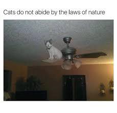themed ceiling fan ceiling fans wildlife ceiling fan pulls rustic wildlife ceiling