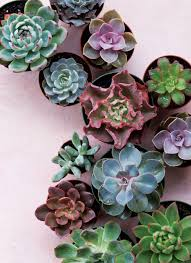 succelents get succulent savvy with these expert tricks atlanta magazine