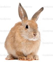 bunny rabbit google search halloween mask studio 1 pinterest