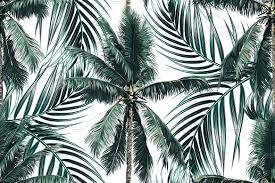 tropical palm leaves trees pattern patterns creative market