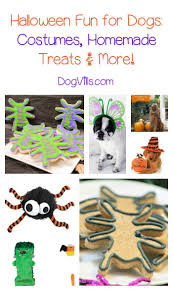 dog halloween party ideas 157 best fall fun with your dog images on pinterest fall puppy