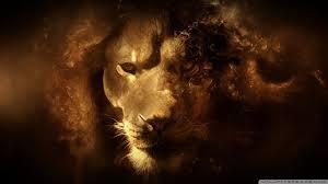 male lion wallpapers lion hd wallpaper 4k hd desktop wallpaper for 4k ultra hd tv