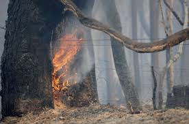 Wildfire Jordan Mt by 1 Arrested In Fast Moving Fire Near Hard Hit California Town