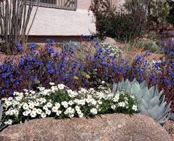 drab to fab 2 win a beautiful xeriscape landscape makeover