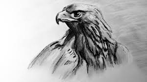 how to draw an eagle pencil and ink technique speed drawing of