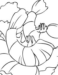 shrimp coloring pages getcoloringpages com