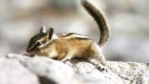 animals eat chipmunks sciencing