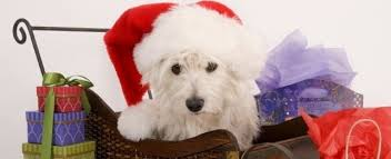 pet christmas best christmas themed dog names petplace