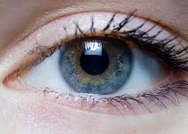 Surface Anatomy Eye The Eyes And Vision Information On The Eyes And Eye Problems