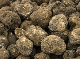 italian truffles black background italian truffles stock photo picture and