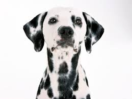 dog wallpapers page 28