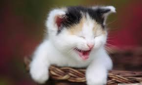 wallpaper cat whatsapp cute crying kitty 4k hd desktop wallpaper for 4k ultra hd tv