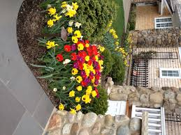 spring landscaping tips for spring eastside landscaping