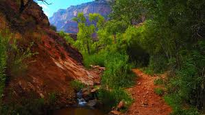 Hawaii Vegetaion images The grand canyon rim to rim alpintiger adventures jpg