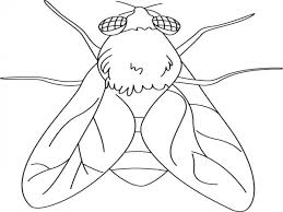 fly coloring page dragonfly coloring pages photos with fly