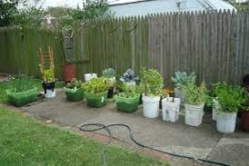 Things In A Backyard Growing Things In Your Backyard That You Can Use Living Out The