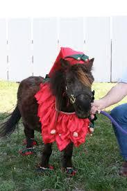 Halloween Costumes Horse Halloween Costumes U0027em Sew U0027em Fun Horse