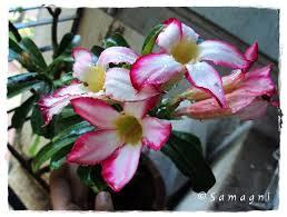 Low Maintenance Plants And Flowers - growing plants samagni