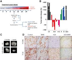 combined mek and pi3k inhibition in a mouse model of pancreatic