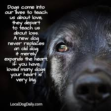 coping with loss of pet pets behaving badly solutions with dr kate when your dog dies