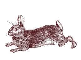 running rabbit drawings fine art america