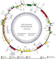 frontiers phylogenomic analysis and dynamic evolution of