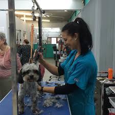 isabel u0027s dog grooming