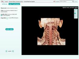 Anatomy And Physiology Study Tools Anatomy Interactive Study Tools Anatomy And Physiology Study Guide