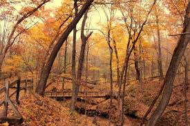 Iowa national parks images 10 state parks in iowa with the most beautiful fall foliage jpg