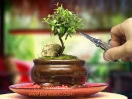 miniature indoor bonsai tree garden gardening ideas