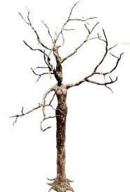 this is me if i were a tree if i were a plant i d be a