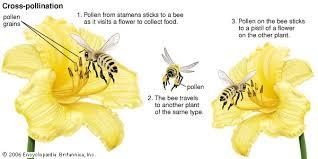 Life Of A Flower - flower definition anatomy physiology u0026 facts britannica com