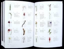 flower encyclopedia flower encyclopedia with pictures book review encyclopedia of