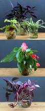 Plants To Grow Indoors Grow Beautiful Indoor Plants In Glass Bottles Page 2 Of 2