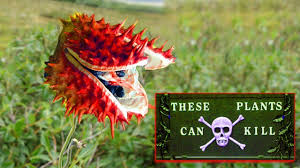 Poisonous Garden Flowers by Top 10 Deadly And Poisonous Plants In The World 2017 You Should