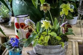 houseplants bring life oxygen positive energy indoors the