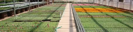 Family Garden Center Basin Nursery U0026 Garden Center Family Owned U0026 Operated Since 1958