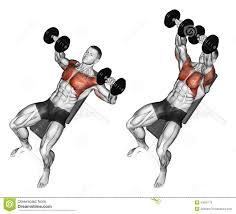 exercising dumbbell bench press lying incline bench bodybuilding