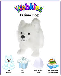 american eskimo dog yahoo webkinz eskimo dog unboxing video wkn webkinz newz