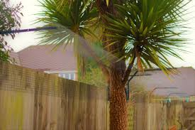 Cateracterum Palm by Fence Mounted Systems U2013 Cats U2013 Sanctuary Sos U2013 Secure Outdoor