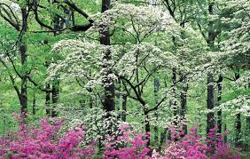 amazing small garden trees design ornamental trees for small