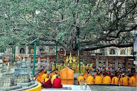 india pm to present sapling of original lord buddha bodhi tree