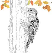 amazon com the aviary bird portraits to color 9781438008950