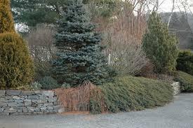designing for winter interest a garden for all