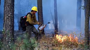 Wildfire Honey by Large Wildfires Force Mandatory Evacuations Near Spokane Kiro Tv
