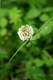 Type Of Grass For Garden Identify Lawn Weeds Learn About Common Weeds