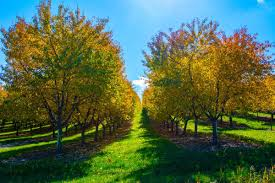 fall color tour leelanau county spots north