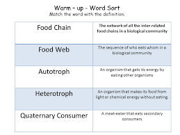 what travels through a food chain or web images Stations activity food chain food webs and energy pyramid jpg