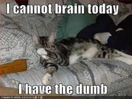 Bad Grammar Meme - dissertation on lolcats really sundog
