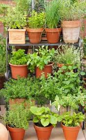 pot up a productive patio garden hanging plant herbs and patios